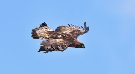 Another Eagle sighting in Southern Scotland