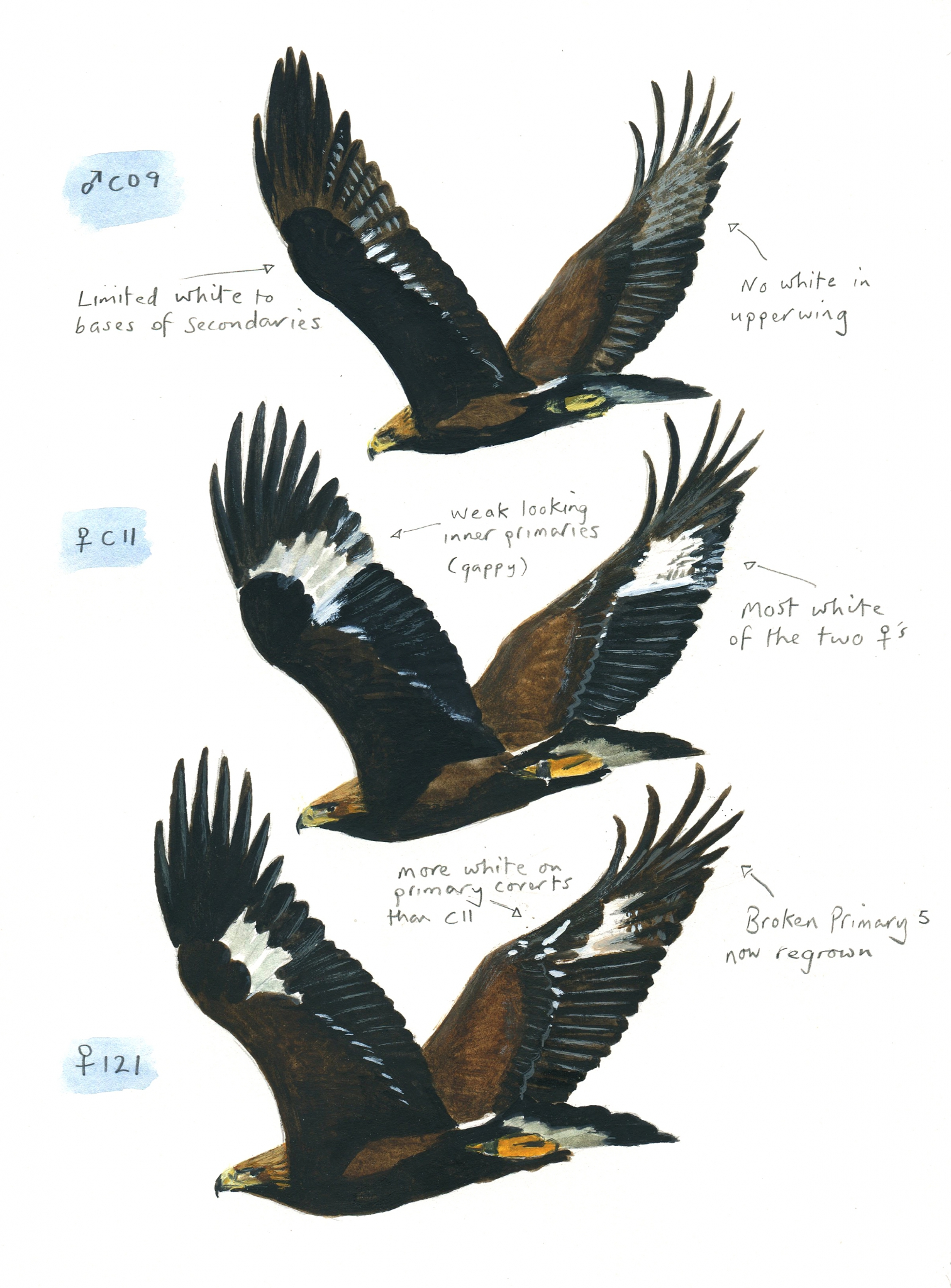 Identifying the individual Eagles
