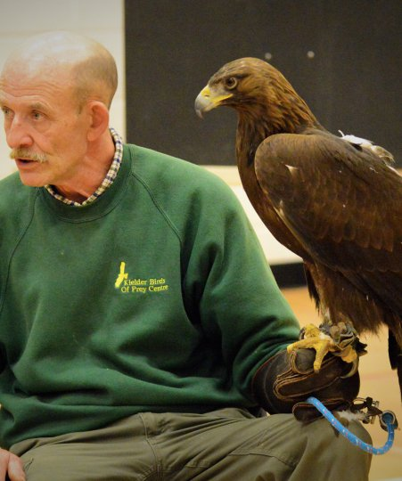 Falconer, Ray Lowden from Kielder Bird of Prey Centre with his Golden Eagle, Mac.