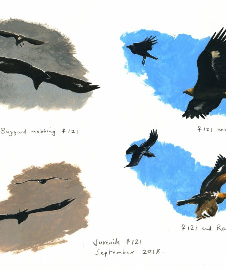 Golden Eagle Paintings