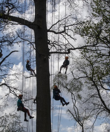 Cub Scouts from Innerliethen climbing an old oak tree for an eagle-eyed view