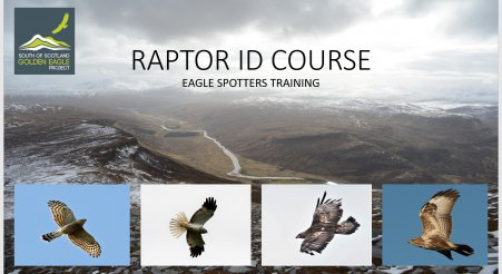 Raptor Identification Training